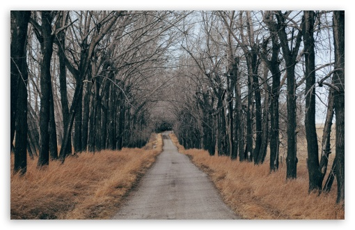 Trees Along A Country Road ❤ 4K UHD Wallpaper for Wide 16:10 5:3 Widescreen WHXGA WQXGA WUXGA WXGA WGA ; UltraWide 21:9 24:10 ; 4K UHD 16:9 Ultra High Definition 2160p 1440p 1080p 900p 720p ; UHD 16:9 2160p 1440p 1080p 900p 720p ; Standard 4:3 5:4 3:2 Fullscreen UXGA XGA SVGA QSXGA SXGA DVGA HVGA HQVGA ( Apple PowerBook G4 iPhone 4 3G 3GS iPod Touch ) ; Smartphone 16:9 3:2 5:3 2160p 1440p 1080p 900p 720p DVGA HVGA HQVGA ( Apple PowerBook G4 iPhone 4 3G 3GS iPod Touch ) WGA ; Tablet 1:1 ; iPad 1/2/Mini ; Mobile 4:3 5:3 3:2 16:9 5:4 - UXGA XGA SVGA WGA DVGA HVGA HQVGA ( Apple PowerBook G4 iPhone 4 3G 3GS iPod Touch ) 2160p 1440p 1080p 900p 720p QSXGA SXGA ; Dual 16:10 5:3 16:9 4:3 5:4 3:2 WHXGA WQXGA WUXGA WXGA WGA 2160p 1440p 1080p 900p 720p UXGA XGA SVGA QSXGA SXGA DVGA HVGA HQVGA ( Apple PowerBook G4 iPhone 4 3G 3GS iPod Touch ) ; Triple 16:10 5:3 16:9 4:3 5:4 3:2 WHXGA WQXGA WUXGA WXGA WGA 2160p 1440p 1080p 900p 720p UXGA XGA SVGA QSXGA SXGA DVGA HVGA HQVGA ( Apple PowerBook G4 iPhone 4 3G 3GS iPod Touch ) ;