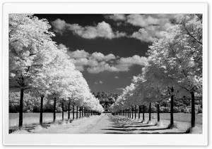 Trees Along The Road Black And White HD Wide Wallpaper for Widescreen