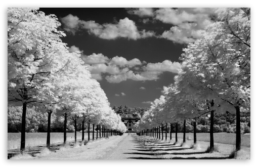 Trees Along The Road Black And White HD wallpaper for Wide 16:10 5:3 Widescreen WHXGA WQXGA WUXGA WXGA WGA ; HD 16:9 High Definition WQHD QWXGA 1080p 900p 720p QHD nHD ; Standard 4:3 5:4 3:2 Fullscreen UXGA XGA SVGA QSXGA SXGA DVGA HVGA HQVGA devices ( Apple PowerBook G4 iPhone 4 3G 3GS iPod Touch ) ; Tablet 1:1 ; iPad 1/2/Mini ; Mobile 4:3 5:3 3:2 16:9 5:4 - UXGA XGA SVGA WGA DVGA HVGA HQVGA devices ( Apple PowerBook G4 iPhone 4 3G 3GS iPod Touch ) WQHD QWXGA 1080p 900p 720p QHD nHD QSXGA SXGA ;