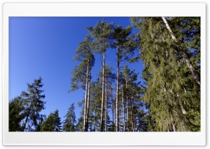 Trees and Blue Sky HD Wide Wallpaper for Widescreen