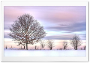 Trees And Fence, Winter HD Wide Wallpaper for Widescreen