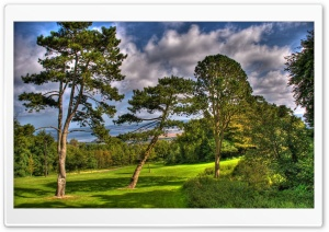 Trees At Summer, HDR HD Wide Wallpaper for Widescreen