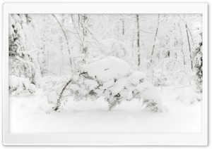 Trees Bending Under the Weight of Snow HD Wide Wallpaper for Widescreen