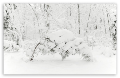Trees Bending Under the Weight of Snow HD wallpaper for Wide 16:10 5:3 Widescreen WHXGA WQXGA WUXGA WXGA WGA ; HD 16:9 High Definition WQHD QWXGA 1080p 900p 720p QHD nHD ; Standard 4:3 5:4 3:2 Fullscreen UXGA XGA SVGA QSXGA SXGA DVGA HVGA HQVGA devices ( Apple PowerBook G4 iPhone 4 3G 3GS iPod Touch ) ; Tablet 1:1 ; iPad 1/2/Mini ; Mobile 4:3 5:3 3:2 16:9 5:4 - UXGA XGA SVGA WGA DVGA HVGA HQVGA devices ( Apple PowerBook G4 iPhone 4 3G 3GS iPod Touch ) WQHD QWXGA 1080p 900p 720p QHD nHD QSXGA SXGA ; Dual 16:10 5:3 16:9 4:3 5:4 WHXGA WQXGA WUXGA WXGA WGA WQHD QWXGA 1080p 900p 720p QHD nHD UXGA XGA SVGA QSXGA SXGA ;