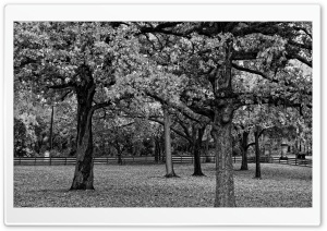 Trees Black And White HD Wide Wallpaper for Widescreen