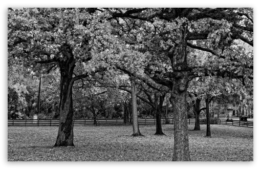 Trees Black And White HD wallpaper for Wide 16:10 5:3 Widescreen WHXGA WQXGA WUXGA WXGA WGA ; HD 16:9 High Definition WQHD QWXGA 1080p 900p 720p QHD nHD ; Standard 4:3 5:4 3:2 Fullscreen UXGA XGA SVGA QSXGA SXGA DVGA HVGA HQVGA devices ( Apple PowerBook G4 iPhone 4 3G 3GS iPod Touch ) ; Tablet 1:1 ; iPad 1/2/Mini ; Mobile 4:3 5:3 3:2 16:9 5:4 - UXGA XGA SVGA WGA DVGA HVGA HQVGA devices ( Apple PowerBook G4 iPhone 4 3G 3GS iPod Touch ) WQHD QWXGA 1080p 900p 720p QHD nHD QSXGA SXGA ;