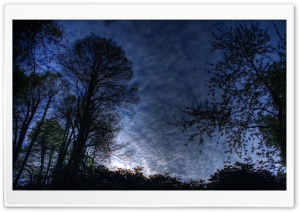 Trees HDR HD Wide Wallpaper for Widescreen
