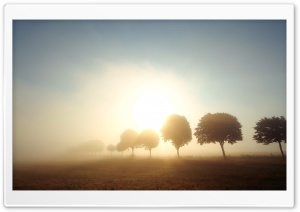 Trees In Morning Mist HD Wide Wallpaper for Widescreen