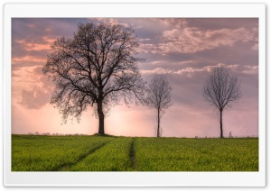 Trees In Open Field HD Wide Wallpaper for Widescreen