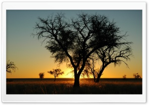 Trees In Open Field, Sunset HD Wide Wallpaper for Widescreen