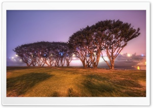 Trees In San Diego HD Wide Wallpaper for Widescreen