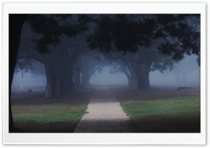 Trees In The Misty HD Wide Wallpaper for Widescreen