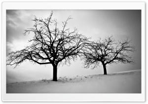Trees In Winter HD Wide Wallpaper for 4K UHD Widescreen desktop & smartphone
