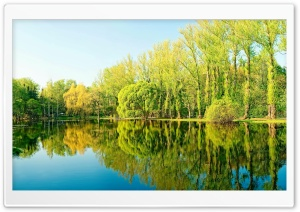 Trees Lake Reflection HD Wide Wallpaper for 4K UHD Widescreen desktop & smartphone