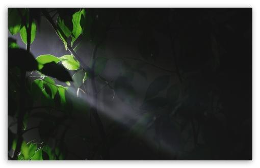 Trees Leaves Lights 2 ❤ 4K UHD Wallpaper for Wide 16:10 5:3 Widescreen WHXGA WQXGA WUXGA WXGA WGA ; 4K UHD 16:9 Ultra High Definition 2160p 1440p 1080p 900p 720p ; Standard 4:3 5:4 3:2 Fullscreen UXGA XGA SVGA QSXGA SXGA DVGA HVGA HQVGA ( Apple PowerBook G4 iPhone 4 3G 3GS iPod Touch ) ; Tablet 1:1 ; iPad 1/2/Mini ; Mobile 4:3 5:3 3:2 16:9 5:4 - UXGA XGA SVGA WGA DVGA HVGA HQVGA ( Apple PowerBook G4 iPhone 4 3G 3GS iPod Touch ) 2160p 1440p 1080p 900p 720p QSXGA SXGA ;