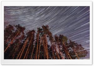 Trees, Night, Star Trail Ultra HD Wallpaper for 4K UHD Widescreen desktop, tablet & smartphone