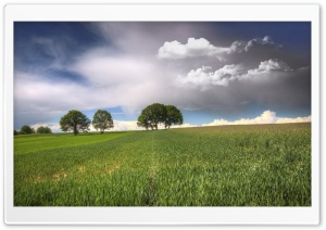 Trees On Fields Clouds HD Wide Wallpaper for 4K UHD Widescreen desktop & smartphone