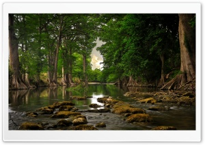 Trees Roots Near River HD Wide Wallpaper for Widescreen