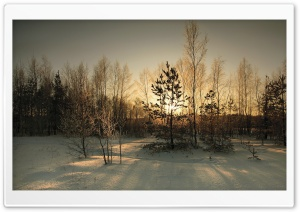 Trees Shadow Winter HD Wide Wallpaper for Widescreen