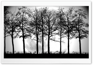 Trees Silhouette HD Wide Wallpaper for Widescreen