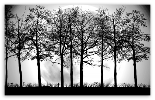Trees Silhouette HD wallpaper for Wide 16:10 5:3 Widescreen WHXGA WQXGA WUXGA WXGA WGA ; HD 16:9 High Definition WQHD QWXGA 1080p 900p 720p QHD nHD ; Standard 4:3 5:4 3:2 Fullscreen UXGA XGA SVGA QSXGA SXGA DVGA HVGA HQVGA devices ( Apple PowerBook G4 iPhone 4 3G 3GS iPod Touch ) ; Tablet 1:1 ; iPad 1/2/Mini ; Mobile 4:3 5:3 3:2 5:4 - UXGA XGA SVGA WGA DVGA HVGA HQVGA devices ( Apple PowerBook G4 iPhone 4 3G 3GS iPod Touch ) QSXGA SXGA ;