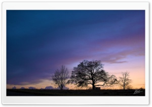 Trees Silhouette Sunset HD Wide Wallpaper for Widescreen