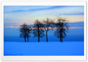 Trees Skyline HD Wide Wallpaper for Widescreen