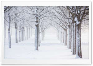 Trees, Snow, Winter Ultra HD Wallpaper for 4K UHD Widescreen desktop, tablet & smartphone