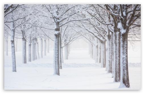 Trees, Snow, Winter UltraHD Wallpaper for Wide 16:10 5:3 Widescreen WHXGA WQXGA WUXGA WXGA WGA ; UltraWide 21:9 24:10 ; 8K UHD TV 16:9 Ultra High Definition 2160p 1440p 1080p 900p 720p ; UHD 16:9 2160p 1440p 1080p 900p 720p ; Standard 4:3 5:4 3:2 Fullscreen UXGA XGA SVGA QSXGA SXGA DVGA HVGA HQVGA ( Apple PowerBook G4 iPhone 4 3G 3GS iPod Touch ) ; Smartphone 16:9 3:2 5:3 2160p 1440p 1080p 900p 720p DVGA HVGA HQVGA ( Apple PowerBook G4 iPhone 4 3G 3GS iPod Touch ) WGA ; Tablet 1:1 ; iPad 1/2/Mini ; Mobile 4:3 5:3 3:2 16:9 5:4 - UXGA XGA SVGA WGA DVGA HVGA HQVGA ( Apple PowerBook G4 iPhone 4 3G 3GS iPod Touch ) 2160p 1440p 1080p 900p 720p QSXGA SXGA ;