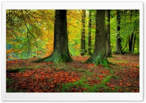 Trees Trunks, Autumn HD Wide Wallpaper for Widescreen