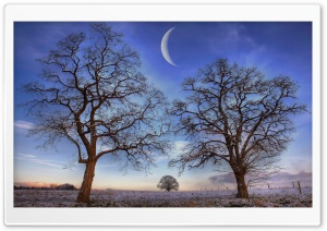 Trees Under New Moon, Winter HD Wide Wallpaper for Widescreen