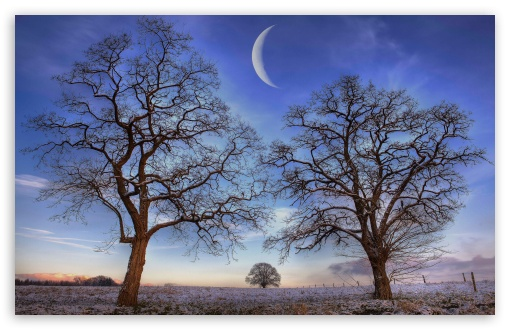 Trees Under New Moon, Winter ❤ 4K UHD Wallpaper for Wide 16:10 5:3 Widescreen WHXGA WQXGA WUXGA WXGA WGA ; 4K UHD 16:9 Ultra High Definition 2160p 1440p 1080p 900p 720p ; UHD 16:9 2160p 1440p 1080p 900p 720p ; Standard 4:3 5:4 3:2 Fullscreen UXGA XGA SVGA QSXGA SXGA DVGA HVGA HQVGA ( Apple PowerBook G4 iPhone 4 3G 3GS iPod Touch ) ; Tablet 1:1 ; iPad 1/2/Mini ; Mobile 4:3 5:3 3:2 16:9 5:4 - UXGA XGA SVGA WGA DVGA HVGA HQVGA ( Apple PowerBook G4 iPhone 4 3G 3GS iPod Touch ) 2160p 1440p 1080p 900p 720p QSXGA SXGA ;