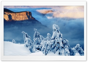 Trees Under Snow On The Rock HD Wide Wallpaper for Widescreen