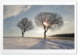 Trees, Winter HD Wide Wallpaper for Widescreen