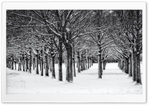 Trees, Winter, Black and White Ultra HD Wallpaper for 4K UHD Widescreen desktop, tablet & smartphone