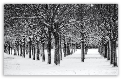 Trees, Winter, Black and White UltraHD Wallpaper for Wide 16:10 5:3 Widescreen WHXGA WQXGA WUXGA WXGA WGA ; UltraWide 21:9 24:10 ; 8K UHD TV 16:9 Ultra High Definition 2160p 1440p 1080p 900p 720p ; UHD 16:9 2160p 1440p 1080p 900p 720p ; Standard 4:3 5:4 3:2 Fullscreen UXGA XGA SVGA QSXGA SXGA DVGA HVGA HQVGA ( Apple PowerBook G4 iPhone 4 3G 3GS iPod Touch ) ; Smartphone 16:9 3:2 5:3 2160p 1440p 1080p 900p 720p DVGA HVGA HQVGA ( Apple PowerBook G4 iPhone 4 3G 3GS iPod Touch ) WGA ; Tablet 1:1 ; iPad 1/2/Mini ; Mobile 4:3 5:3 3:2 16:9 5:4 - UXGA XGA SVGA WGA DVGA HVGA HQVGA ( Apple PowerBook G4 iPhone 4 3G 3GS iPod Touch ) 2160p 1440p 1080p 900p 720p QSXGA SXGA ;