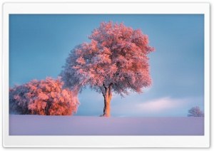 Trees, Winter, Pink Sunset HD Wide Wallpaper for Widescreen