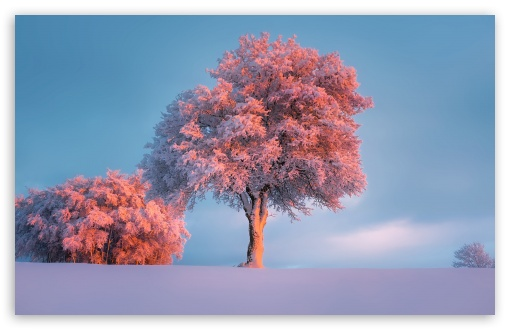 Download Trees, Winter, Pink Sunset Wallpaper