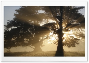 Trees With Sunlight HD Wide Wallpaper for Widescreen