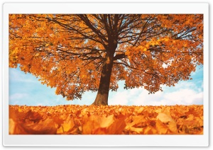 Trees with Yellow Leaves in Fall HD Wide Wallpaper for Widescreen