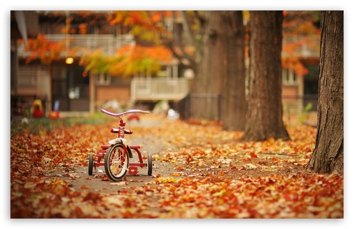 Tricycle ❤ 4K UHD Wallpaper for Wide 16:10 5:3 Widescreen WHXGA WQXGA WUXGA WXGA WGA ; 4K UHD 16:9 Ultra High Definition 2160p 1440p 1080p 900p 720p ; Standard 4:3 5:4 3:2 Fullscreen UXGA XGA SVGA QSXGA SXGA DVGA HVGA HQVGA ( Apple PowerBook G4 iPhone 4 3G 3GS iPod Touch ) ; Tablet 1:1 ; iPad 1/2/Mini ; Mobile 4:3 5:3 3:2 16:9 5:4 - UXGA XGA SVGA WGA DVGA HVGA HQVGA ( Apple PowerBook G4 iPhone 4 3G 3GS iPod Touch ) 2160p 1440p 1080p 900p 720p QSXGA SXGA ;