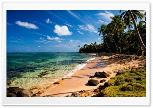 Tropical Beach With Grass HD Wide Wallpaper for Widescreen