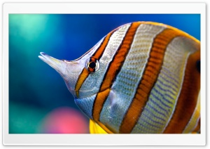 Tropical Fish HD Wide Wallpaper for 4K UHD Widescreen desktop & smartphone