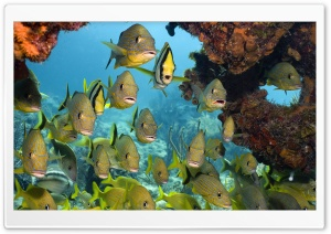 Tropical Fish Ultra HD Wallpaper for 4K UHD Widescreen desktop, tablet & smartphone