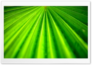 Tropical Leaf HD Wide Wallpaper for Widescreen