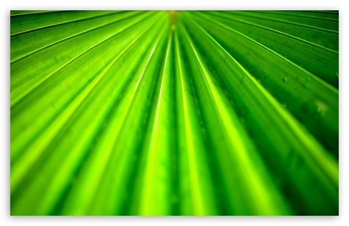 Tropical Leaf HD wallpaper for Wide 16:10 5:3 Widescreen WHXGA WQXGA WUXGA WXGA WGA ; HD 16:9 High Definition WQHD QWXGA 1080p 900p 720p QHD nHD ; Standard 4:3 5:4 3:2 Fullscreen UXGA XGA SVGA QSXGA SXGA DVGA HVGA HQVGA devices ( Apple PowerBook G4 iPhone 4 3G 3GS iPod Touch ) ; Tablet 1:1 ; iPad 1/2/Mini ; Mobile 4:3 5:3 3:2 16:9 5:4 - UXGA XGA SVGA WGA DVGA HVGA HQVGA devices ( Apple PowerBook G4 iPhone 4 3G 3GS iPod Touch ) WQHD QWXGA 1080p 900p 720p QHD nHD QSXGA SXGA ;