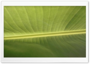 Tropical Leaf HD Wide Wallpaper for 4K UHD Widescreen desktop & smartphone