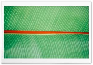 Tropical Leaf HD Wide Wallpaper for 4K UHD Widescreen desktop & smartphone