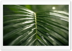 Tropical Rain, Green Leaf HD Wide Wallpaper for 4K UHD Widescreen desktop & smartphone