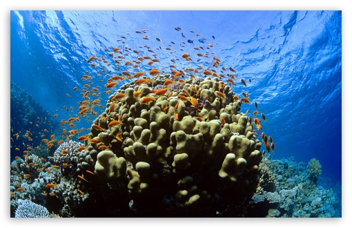 Miscellaneous Tropical Underwater Coral Ocean Reef Fishes Reefs ...